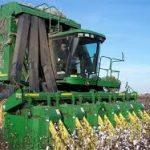 معاون بهبود تولیدات گیاهی سازمان جهادکشاورزی خوزستان : کمباینهای مهاجر علیه بیماری های گیاهی ضدعفونی میشوند