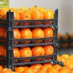 رئیس سازمان صمت خوزستان اعلام کرد: بیش از سههزار تن میوه نوروز ۹۹ در خوزستان توزیع شد